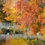 Fall Thanks